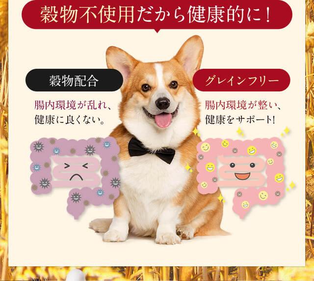 Dog food Mishwan dealer