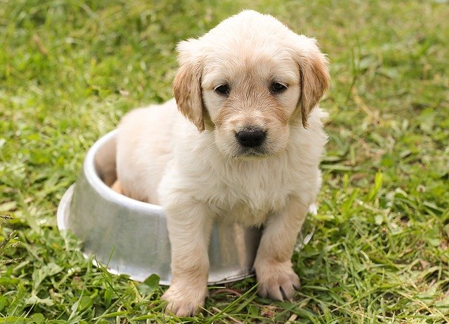 Dog food Mishwan reputation