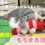 Cat Mochimaru Guinness certification